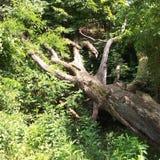 Árvore após a inundação pesada fotografia de stock
