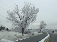 Árvore após a tempestade da neve e de gelo Imagens de Stock Royalty Free