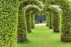 Árvore arqueada na grama verde Zumba dentro Imagem de Stock Royalty Free