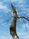 Árvore assustador Fotografia de Stock Royalty Free