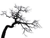 Árvore assustador Foto de Stock Royalty Free