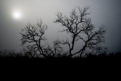Árvore assustador da névoa Imagens de Stock Royalty Free