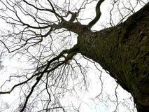 Árvore assustador em um dia nebuloso imagens de stock