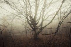 Árvore assustador na névoa Fotos de Stock Royalty Free