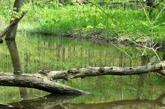 Árvore através da água imagem de stock