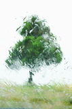 Árvore através do pára-brisas molhado no dia chuvoso imagens de stock royalty free