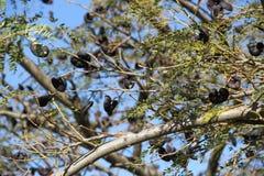 Árvore autóctone Fotos de Stock Royalty Free