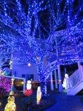 Árvore azul e caminho fotos de stock