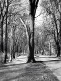 Árvore B&W Foto de Stock Royalty Free