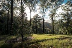 Árvore backlit pelo sol em jardins botânicos elevados da montagem Imagens de Stock