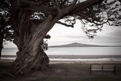 Árvore, banco e vulcão solitários Imagem de Stock Royalty Free