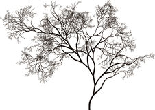 Árvore bonita Imagem de Stock Royalty Free