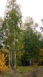 Árvore bonita Fotografia de Stock Royalty Free