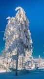 Árvore bonita da neve foto de stock royalty free