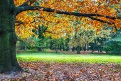 Árvore bonita do outono Imagem de Stock