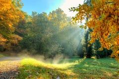 Árvore bonita do outono com as folhas secas caídas Foto de Stock Royalty Free