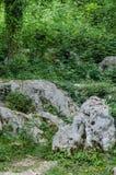 Árvore bonita nas rochas Closup bonito na natureza selvagem Imagem de Stock