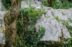 Árvore bonita nas rochas Closup bonito na natureza selvagem Imagens de Stock Royalty Free