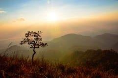 A árvore bonita no nascer do sol fotos de stock royalty free