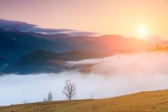 Árvore bonita nos raios do sol do alvorecer Montanhas Carpathian Imagem de Stock