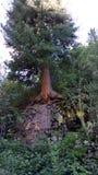 Árvore bonita poderosa, natureza, planta, carvalho fotografia de stock