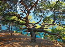 Árvore bonita sobre o fundo azul do mar imagens de stock royalty free