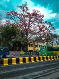 A árvore bonita imagens de stock royalty free
