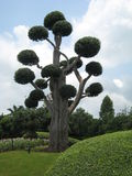 Árvore bonito (stcool) Foto de Stock