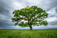 Árvore borrada do verde da Longo-exposição em um campo imagem de stock royalty free