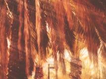 Árvore borrada mola Efeito abstrato do borrão de movimento Foto de Stock Royalty Free