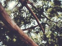 Árvore borrada mola Efeito abstrato do borrão de movimento Imagem de Stock Royalty Free