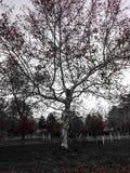 Árvore branca Foto de Stock Royalty Free