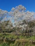 Árvore branca bonita da licença fotografia de stock royalty free