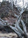 Árvore branca exterior Fotografia de Stock Royalty Free