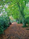 Árvore BRITÂNICA Fotografia de Stock Royalty Free