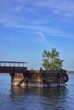 A árvore brota da doca velha do metal pelo rio fotografia de stock