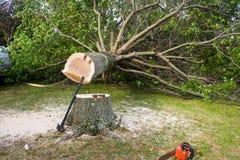 Árvore caída Fotos de Stock Royalty Free