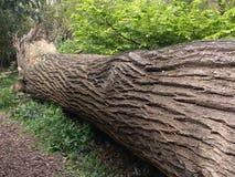 Árvore caída imagem de stock