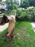 Árvore caída Foto de Stock