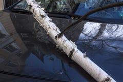 Árvore caída após a tempestade do vento Foto de Stock