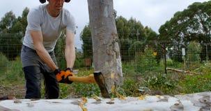 Árvore caída corte do lenhador com machado 4k filme