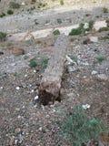 Árvore caída da data foto de stock