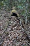 A árvore caída e tornada ôca é bushland Fotos de Stock Royalty Free