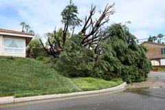 Árvore caída em Fullerton 6 Fotografia de Stock Royalty Free