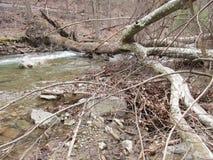 Árvore caída na angra de Owens Imagens de Stock Royalty Free