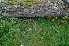 Árvore caída na floresta fotos de stock