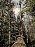 Árvore caída na floresta imagens de stock royalty free