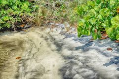 Árvore caída na praia imagem de stock royalty free