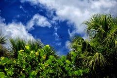 Árvore caída na praia Imagens de Stock Royalty Free
