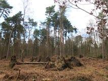 Árvore caída nas madeiras Imagem de Stock